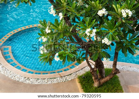 Swimming pool with shade trees and white frangipani. - stock photo