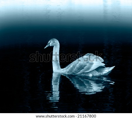 swimming swan in blue color