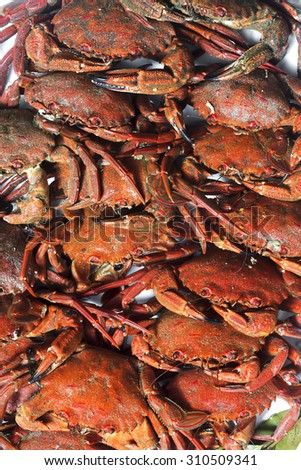 swimming  velvet crabs ,necora of Galicia atlantic coast ,cooked and placed on white plate - stock photo