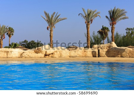 swimming with palm on resort in Egipt - stock photo