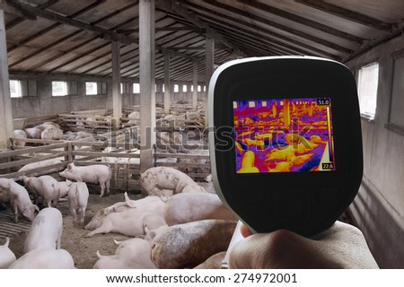 Swine Flu Detection with Thermal Camera - stock photo