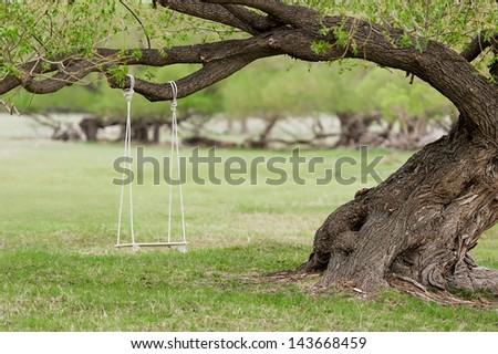 Swing by spreading tree - stock photo