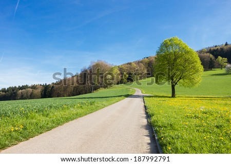 Swiss landscape: countryside during spring season with blue sky