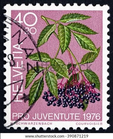 SWITZERLAND - CIRCA 1976: a stamp printed in the Switzerland shows Black Elder, Sambucus Nigra, Medicinal Forest Plant, circa 1976 - stock photo