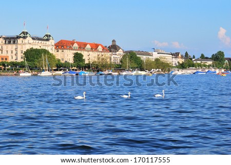 Switzerland, Zurich. Very beautiful Zurich lake with swans in a sunny summer day