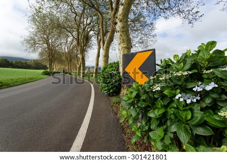 Sycamore alley - stock photo