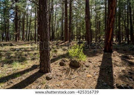 Sycamore Canyon Rim Trail in Arizona.  - stock photo