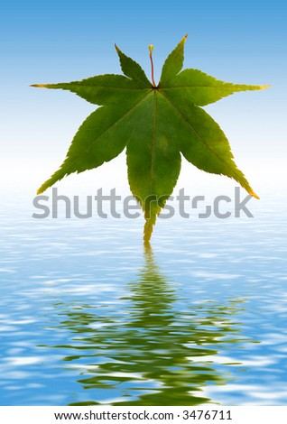 sycamore leaf dipped in rendered water