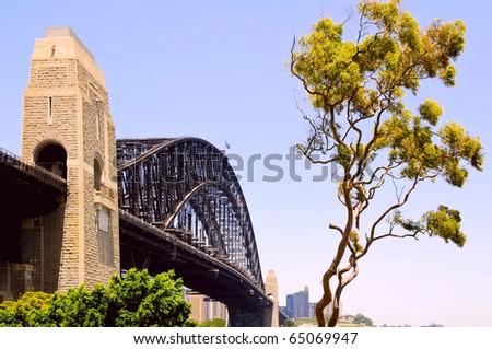 Sydney harbor bridge and iconic gumtree. - stock photo