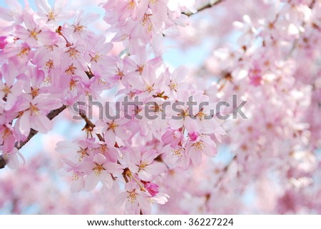 Symbol of Japanese culture - stock photo