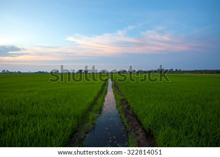 Symmetric image of water canal through the paddy field - stock photo