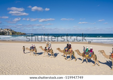 Syney, Australia - June 25, 2016: View of tourists riding trained camels along Bondi Beach, Sydney during daytime.