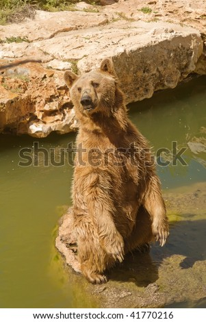 Syrian bear in Jerusalem Zoo