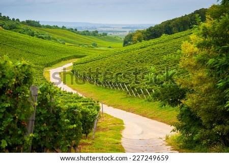 Szekszard Vineyards, Hungary - stock photo