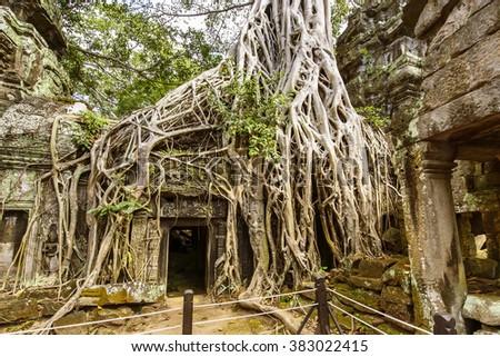 Ta Prohm Temple, Angkor, Cambodia - stock photo