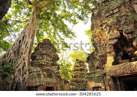 Ta Prohm Temple  of  Angkor Wat  at Cambodia - stock photo