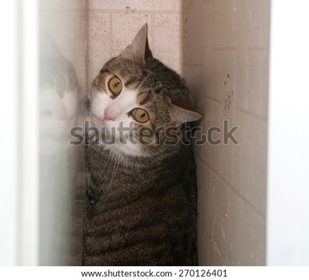 Tabby and white cat hiding behind white cupboard - stock photo