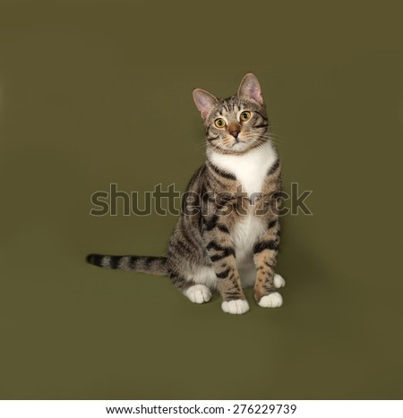 Tabby and white cat sitting on green background - stock photo