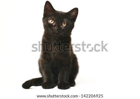 Tabby Black British Shorthair Kitten on white background Cute british shorthair kitten standing on white background - stock photo