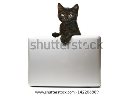 Tabby british shorthair kitten behind laptop/banner Description: Cute small kitten looking straight into camera, standing behind a modern laptop or grey banner. - stock photo