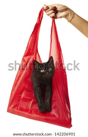 Tabby British Shorthair Kitten in a Shopping Bag Hand holding a cute black british shorthair kitten bought as a present! - stock photo