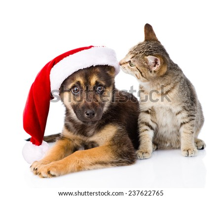 Tabby Cat and Dog with Santa Claus hat. isolated on white background - stock photo