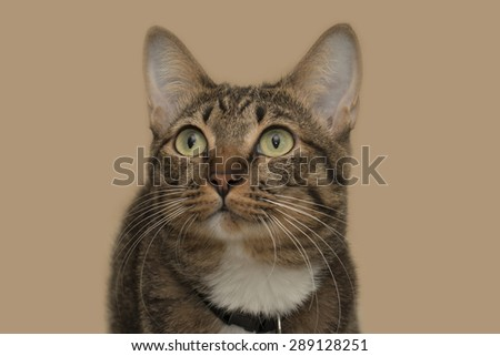 tabby cat blurry with brown background - stock photo