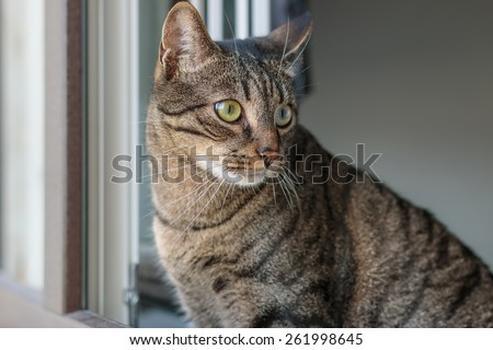 Tabby cat by the window - stock photo