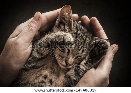 Tabby Cat in the hands of the owner. - stock photo