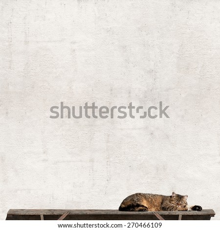 Tabby cat laying on a sun near the wall - stock photo