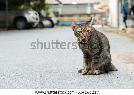 Tabby cat licking his lips - stock photo