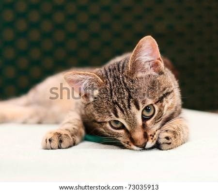 Tabby Cat looking into camera - stock photo