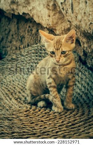 Tabby Cat looks into camera - stock photo