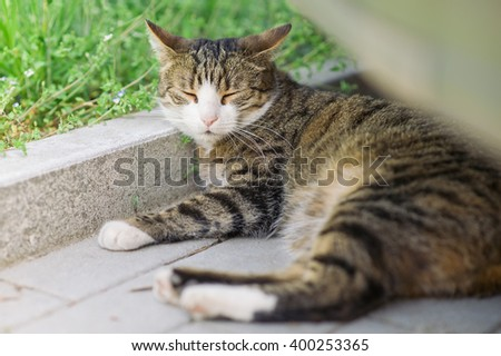 Tabby cat lounging on the ground under a car and hiding from the hot summer sun in the shade - stock photo