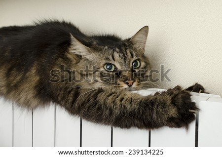 Tabby cat lying a warm radiator - stock photo