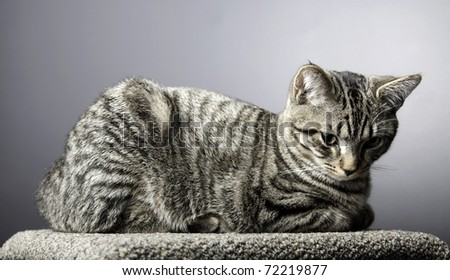 Tabby Cat Lying down - stock photo