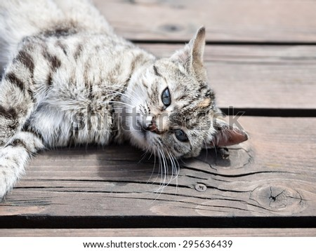 Tabby cat lying on a wood, , soft colours - stock photo