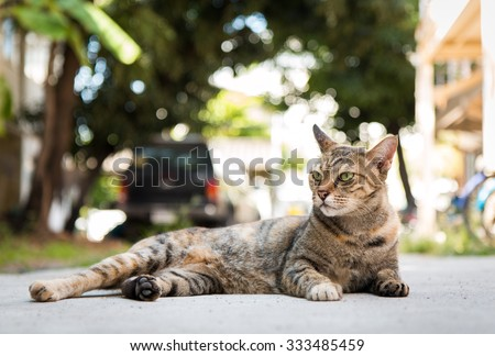Tabby cat lying on cement ground. Natural background. - stock photo