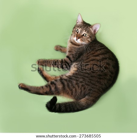 Tabby cat lying on green background - stock photo