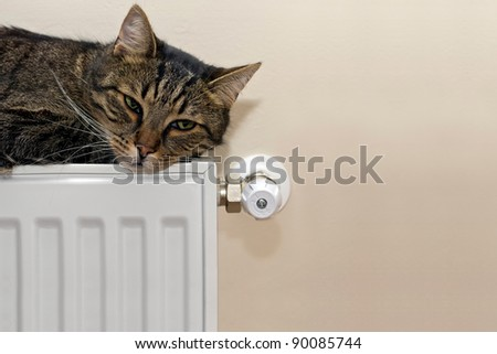 Tabby cat lying on radiator. Copyspace - There is room for text on the photo!