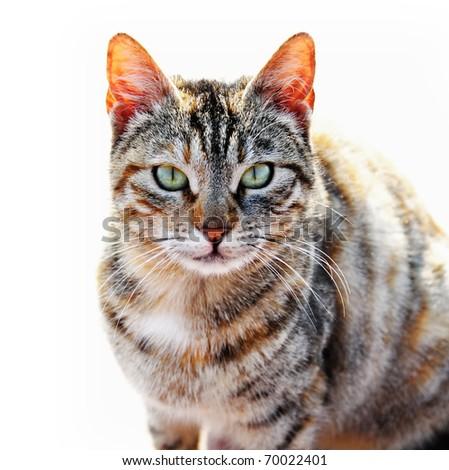 Tabby cat naturally isolated - stock photo