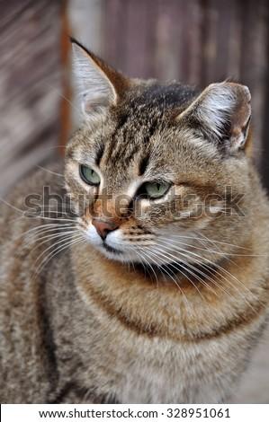 tabby cat nice portrait - stock photo