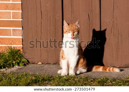 tabby cat on a sunny day casting a cloud over a wooden door - stock photo