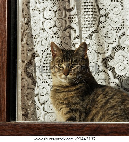 Tabby cat on a windowsill, view from outside. - stock photo