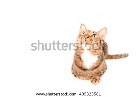 tabby cat on blank banner. Place for text,Tabby cat looking something