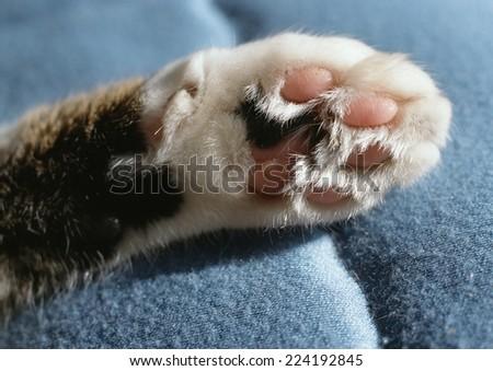 Tabby cat paw, closeup. - stock photo
