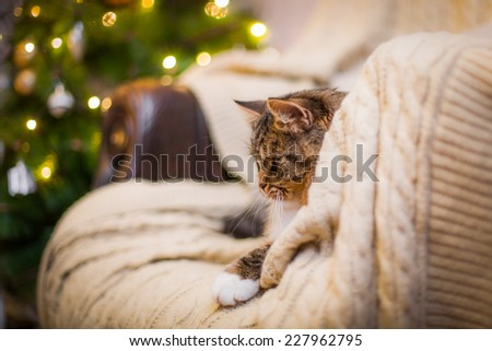Tabby cat plays at the Christmas tree, Christmas holidays