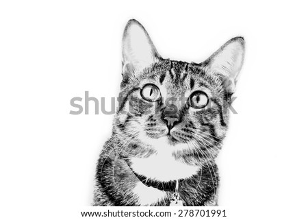 Tabby cat portrait in black and white - stock photo
