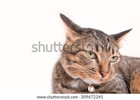 Tabby cat portrait is bored - stock photo