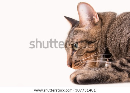 Tabby cat portrait is looking something - stock photo
